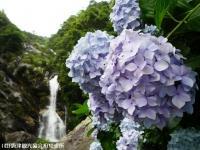 20.滝つぼ周辺(2009年6月22日)03