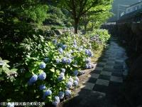 04.ほたる橋市道側(2009年6月25日)02