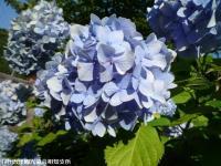06.ほたる橋市道側(2009年6月25日)04