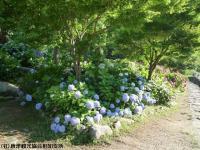 07.ほたる橋川向こう側(2009年6月25日)01