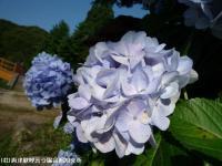 09.ほたる橋川向こう側(2009年6月25日)03