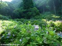 13.憩いの広場(2009年6月25日)01
