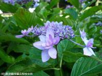 16.憩いの広場(2009年6月25日)04