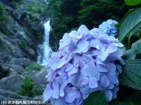 19.滝つぼ周辺(2009年6月25日)02