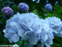 20.滝つぼ周辺(2009年6月25日)03