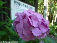 21.おまけ(2009年6月25日)01