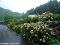 01.ほたる橋駐車場(2009年6月30日)01