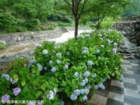 04.ほたる橋市道側(2009年6月30日)02