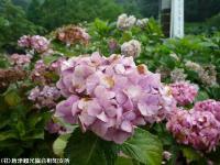05.ほたる橋市道側(2009年6月30日)03