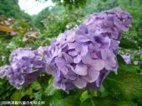 06.ほたる橋市道側(2009年6月30日)04