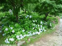 07.ほたる橋川向こう側(2009年6月30日)01