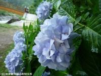 09.ほたる橋川向こう側(2009年6月30日)03