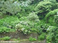 12.遊歩道入口(2009年6月30日)01