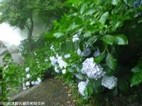 19.滝つぼ周辺(2009年6月30日)02