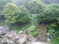 20.滝つぼ周辺(2009年6月30日)03