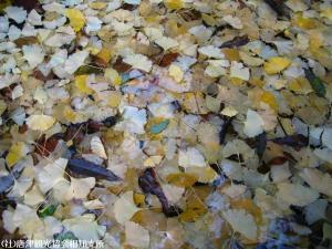 toaru2008112706.jpg