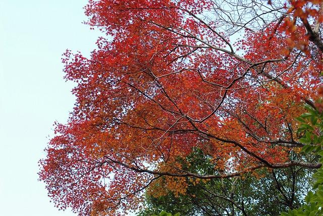 龍泉寺の紅葉10
