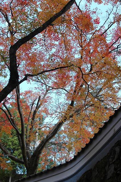 龍泉寺の紅葉13