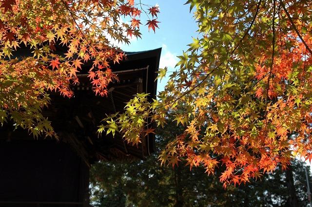龍泉寺の紅葉29