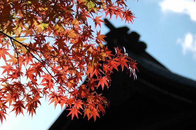 龍泉寺の紅葉35