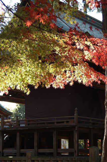 龍泉寺の紅葉36