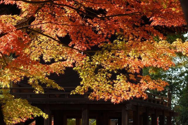 龍泉寺の紅葉39