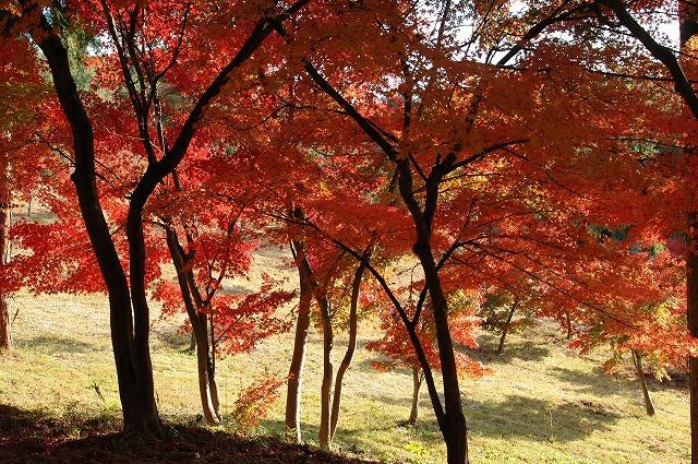 龍泉寺の紅葉40