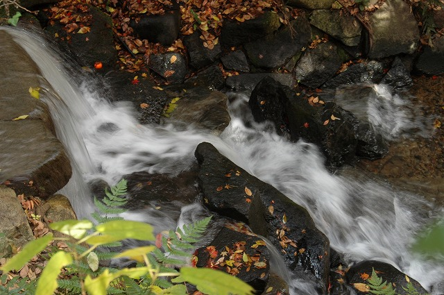 花交の滝5