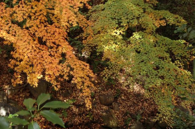 花交の滝8