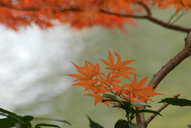 花交の滝10
