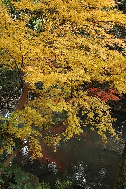 花葉の池4