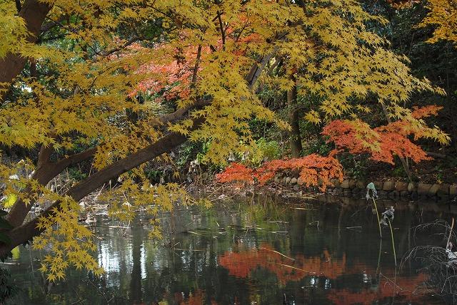花葉の池5