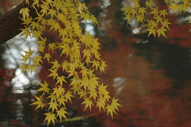 花葉の池8