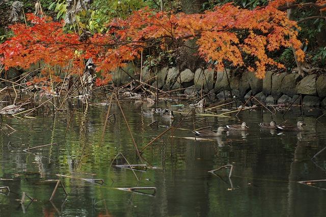 花葉の池9