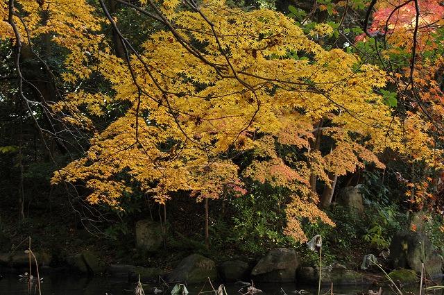 花葉の池11