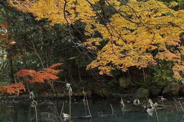 花葉の池12