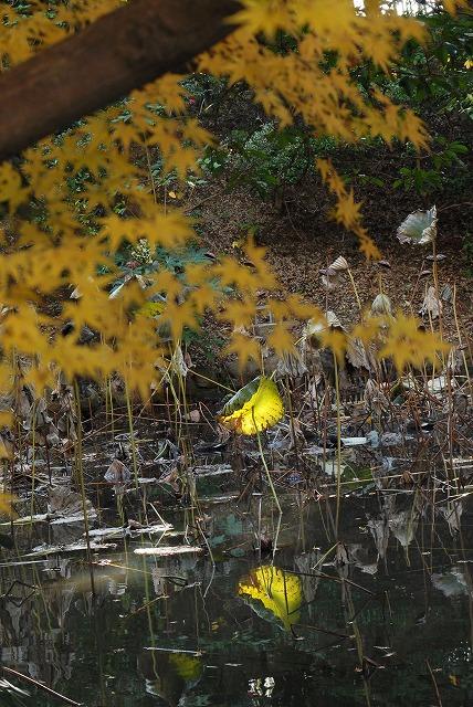 花葉の池13