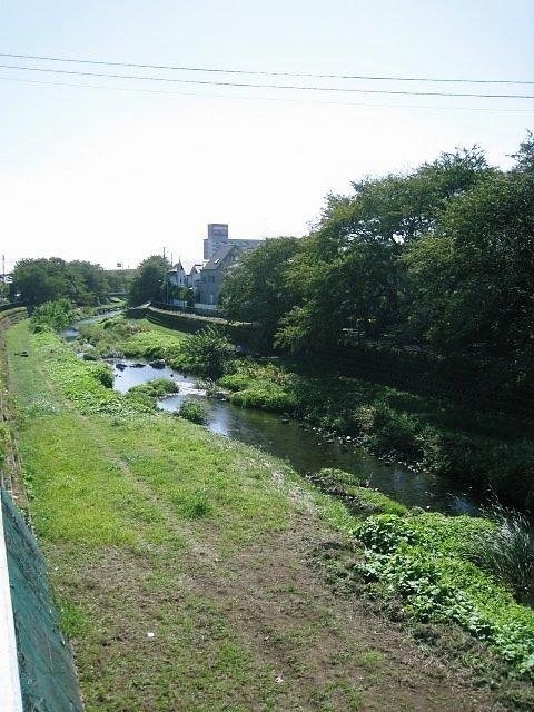 野川を上がって行きます。