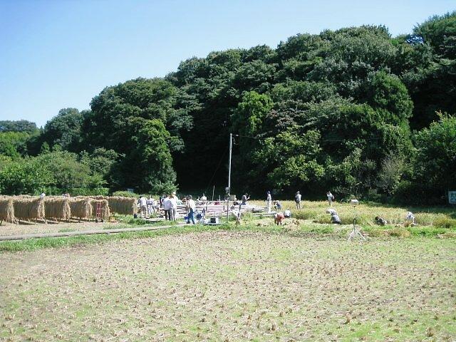 小学生が稲刈りをしていました。