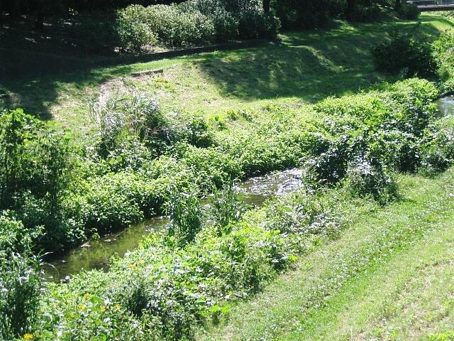 すっかり川幅も小さくなり可愛らしい野川