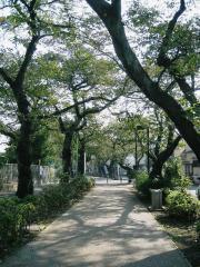 待ち合わせの呑川緑道