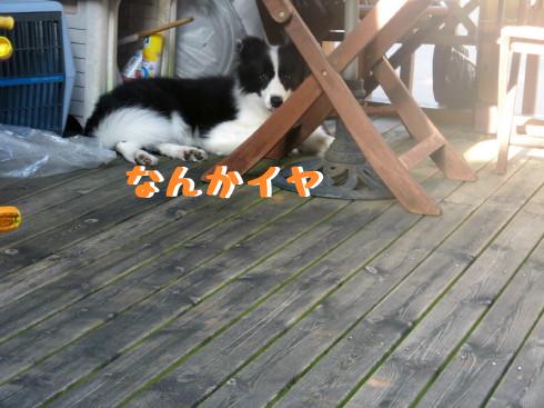 IMG_0008_7.jpg