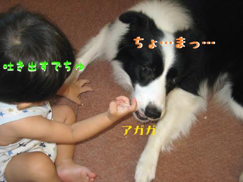 IMG_0008_9.jpg