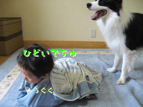 IMG_0009_2_20091002130525.jpg
