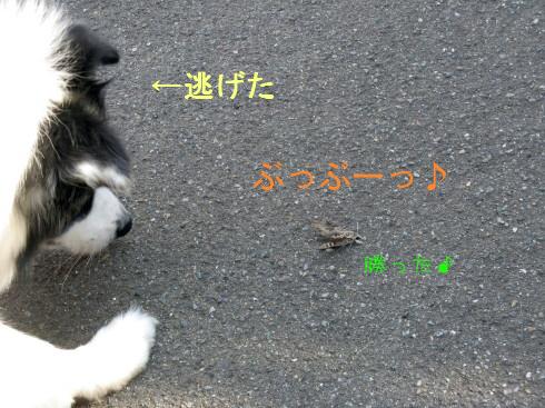 IMG_0036_5.jpg
