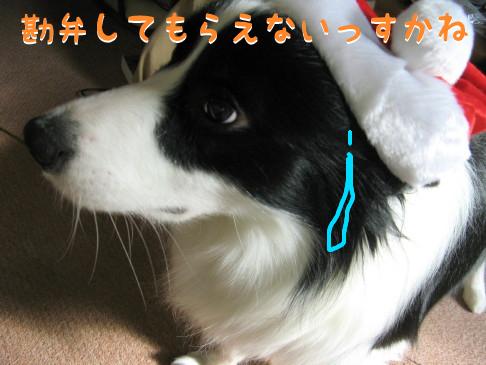 IMG_0046_4.jpg