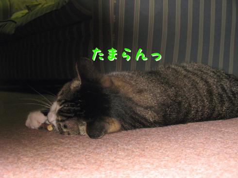 IMG_0065_3.jpg