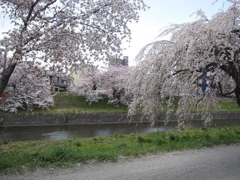 2010_04210012.jpg