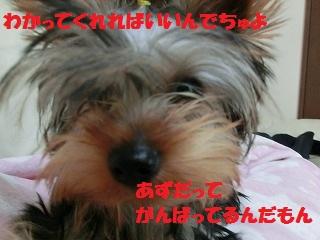 CIMG3357.jpg