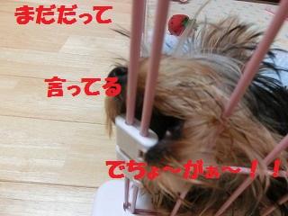CIMG3398.jpg